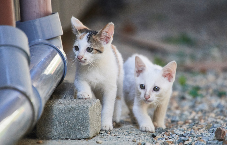 Photo wallpaper kittens, kids, a couple, two kittens