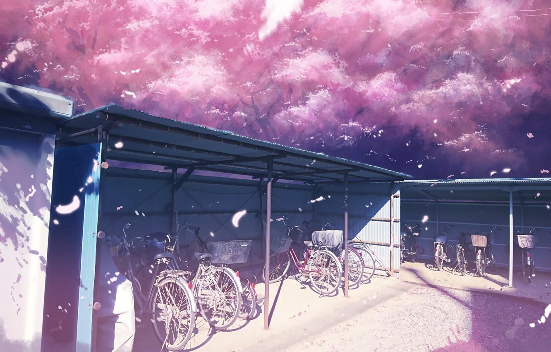 Photo wallpaper spring, Sakura, Parking, bikes