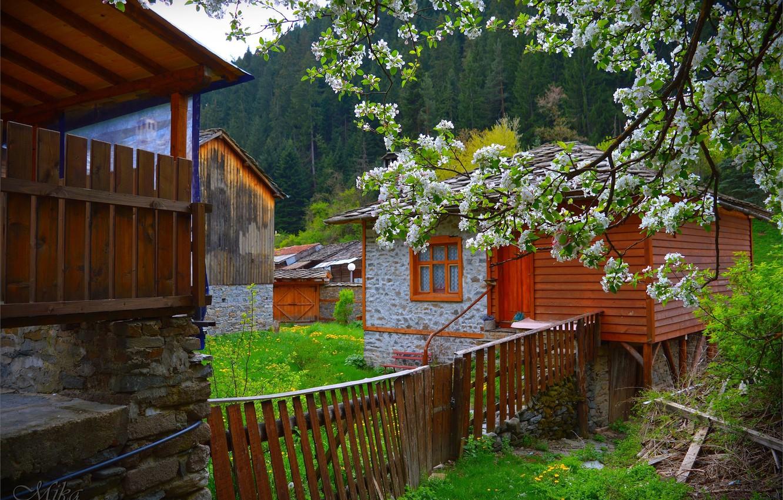 Photo wallpaper Spring, House, House, Spring, Flowering, Yard, Wicket, Flowering