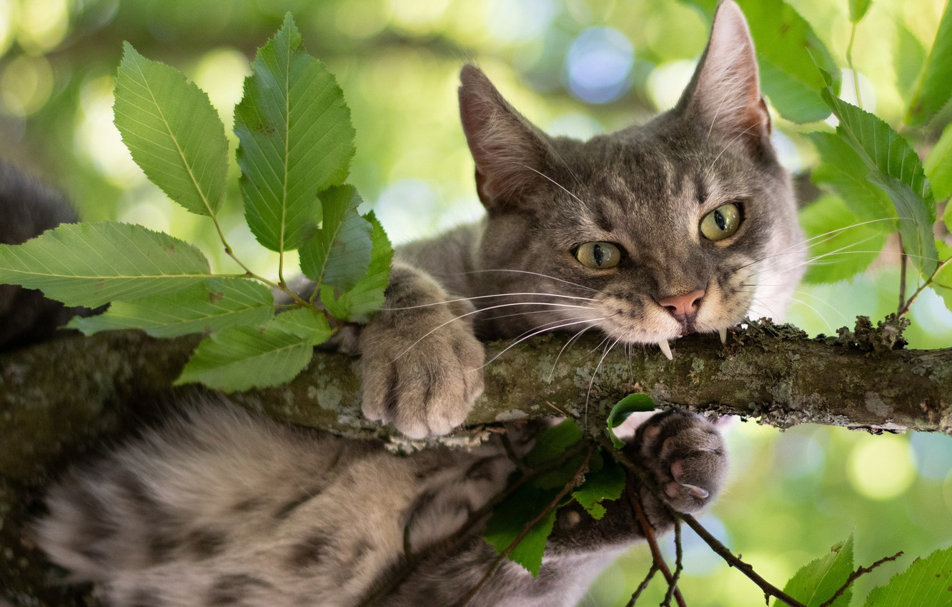 Photo wallpaper cat, cat, look, leaves, branch, on the tree, Kote