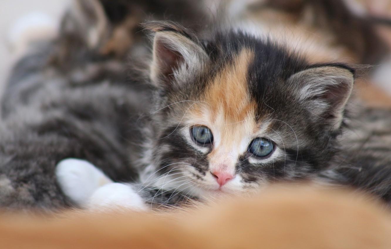 Photo wallpaper look, baby, muzzle, kitty