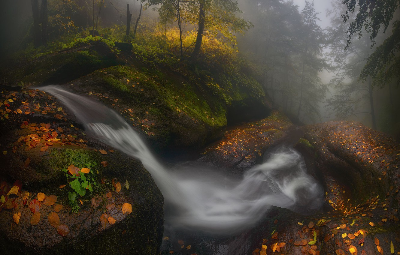 Photo wallpaper forest, water, trees, nature, Autumn, Bulgaria, Materov.