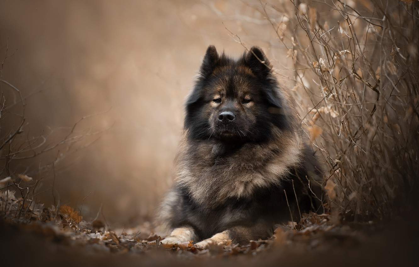 Photo wallpaper nature, each, dog