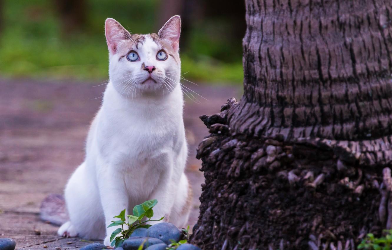 Photo wallpaper cat, look, tree, blue eyes, observation