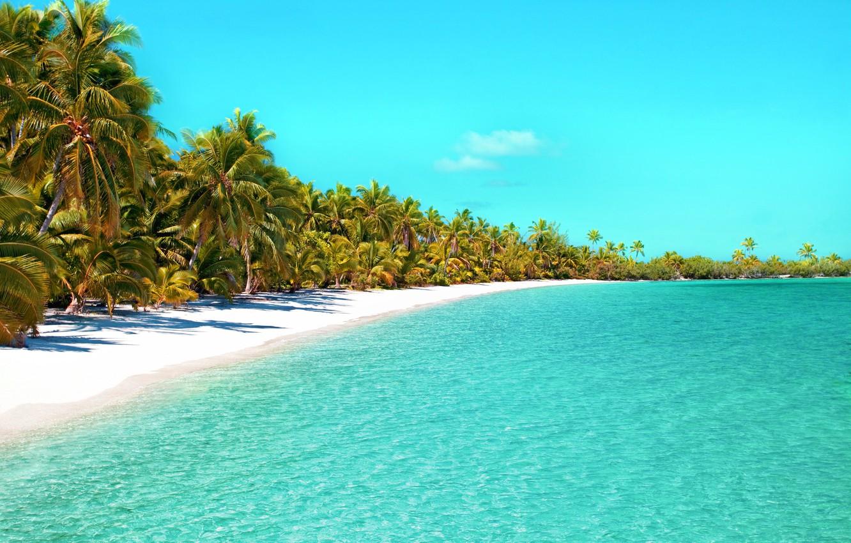Wallpaper Beach Palm Tree Tropical Beach Ocean Beach