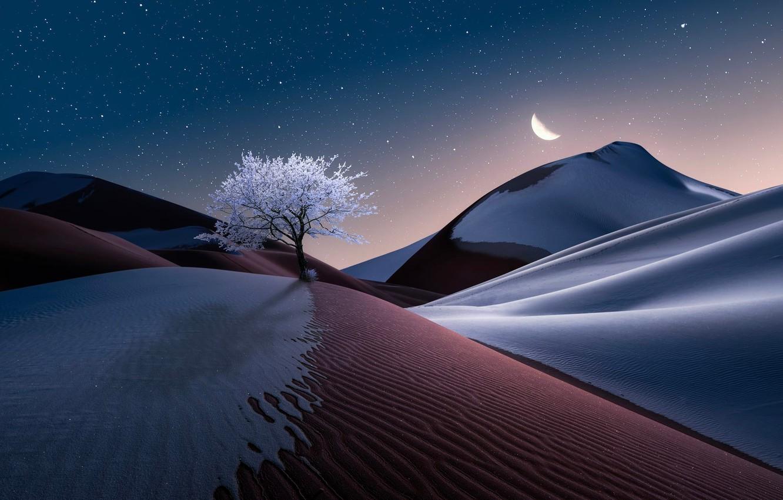 Photo wallpaper the sky, landscape, nature, tree, the moon, desert, graphics, stars, Sands, digital art