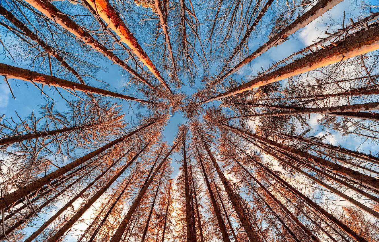 Photo wallpaper forest, the sky, trees