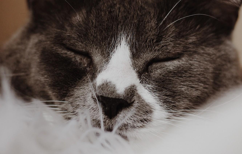 Photo wallpaper cat, cat, face, close-up, sleeping