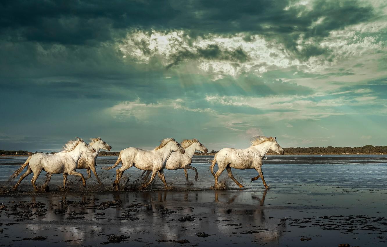 Photo wallpaper the sky, rays, river, horses, horse