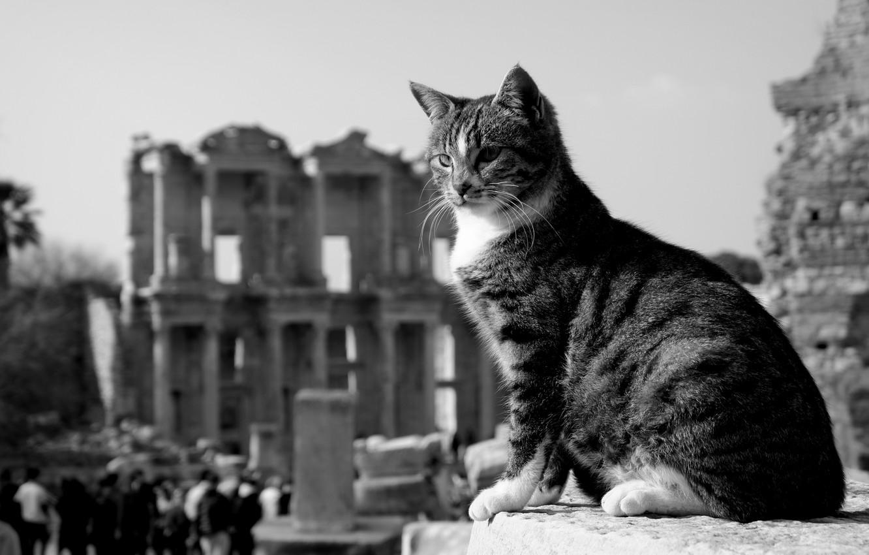 Photo wallpaper cat, cat, black and white, the ruins, monochrome, Turkey, cat, Ephesus