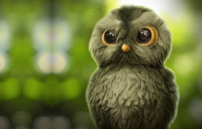 Photo wallpaper owl, art, Owl, children's, Ahmad Merheb