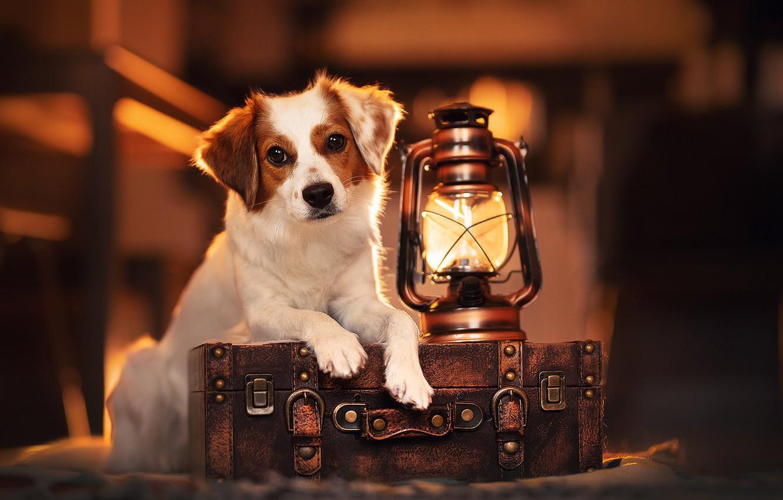 Photo wallpaper look, lamp, dog, lantern, suitcase