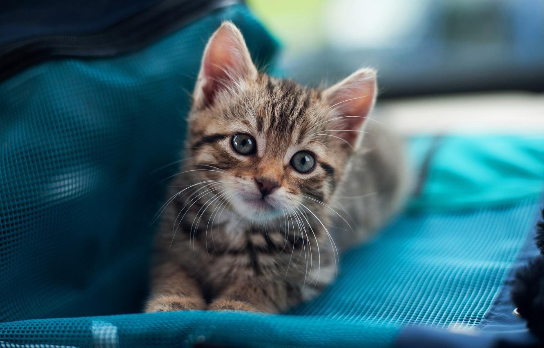Wallpaper Cat Cat Look Kitty Grey Small Muzzle Cute