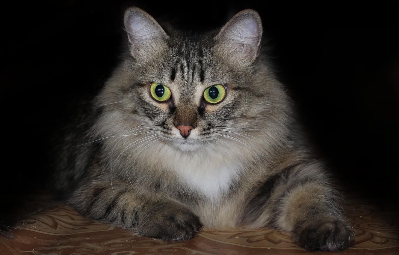 Photo wallpaper cat, background, cat