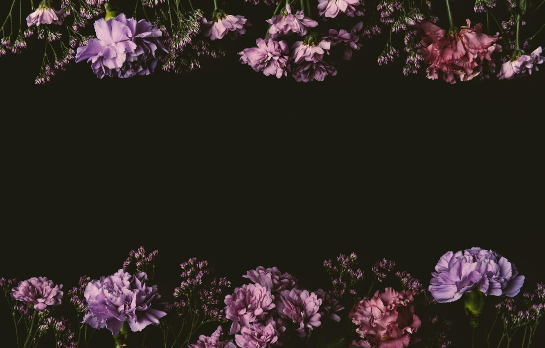 Wallpaper Flowers Roses Colorful Pink Black Background Black Pink Flowers Background Lilac Roses Violet Clove Images For Desktop Section Cvety Download