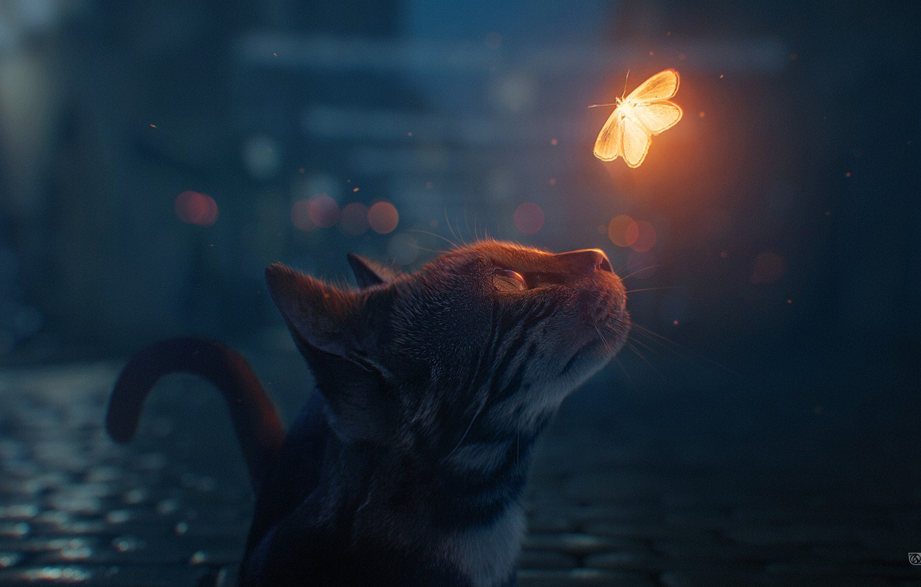 Photo wallpaper cat, night, butterfly, bokeh, by maxasabin