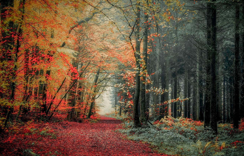 Photo wallpaper autumn, forest, photo, trail