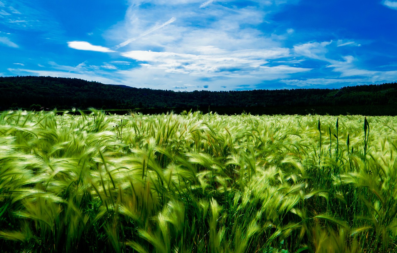 Photo wallpaper field, the sky, the sun, clouds, landscape, nature, day