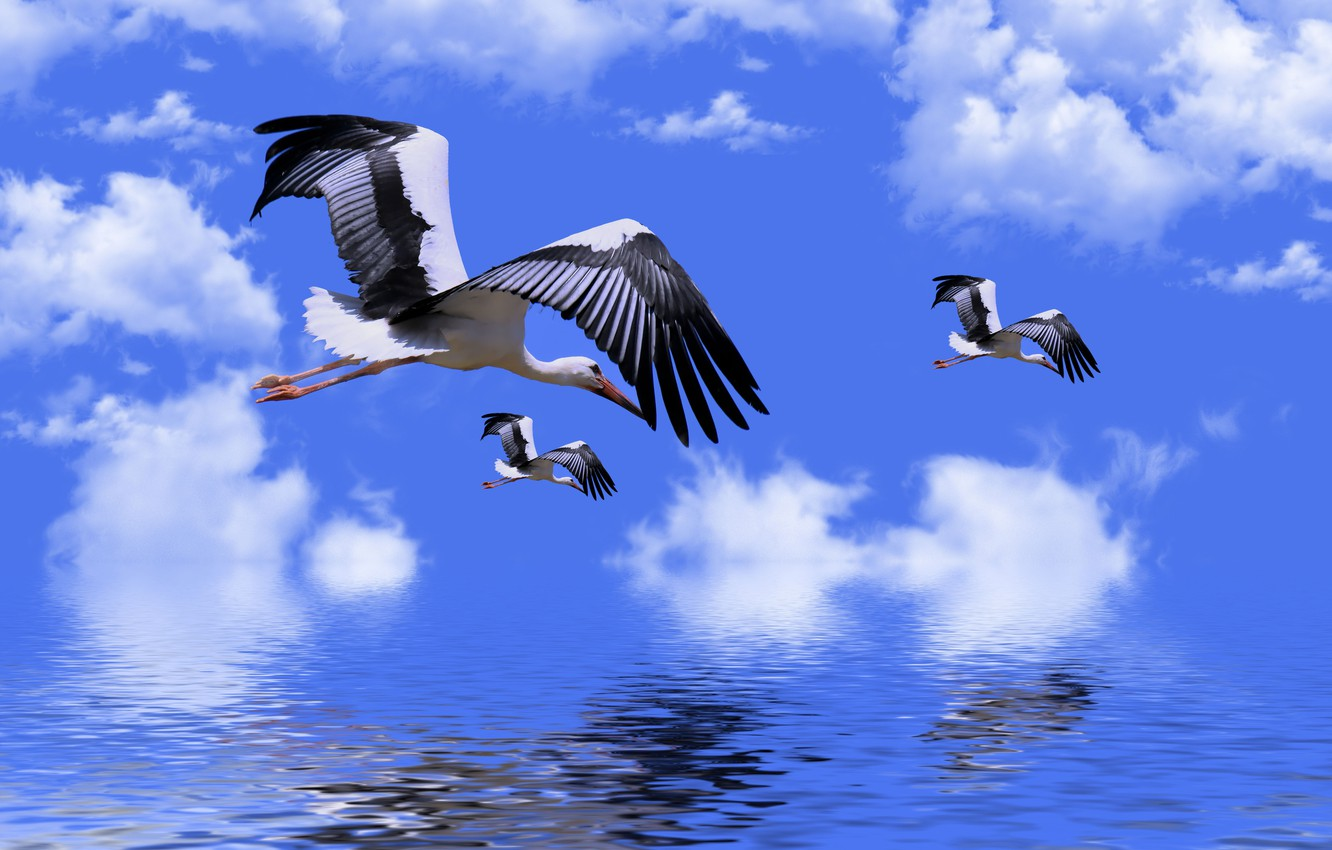 Photo wallpaper the sky, water, clouds, storks, retouching