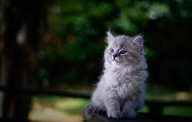 Photo wallpaper background, portrait, blur, baby, kitty