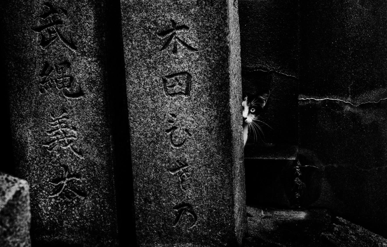Photo wallpaper cat, characters, cat, hieroglyphs, tomorca
