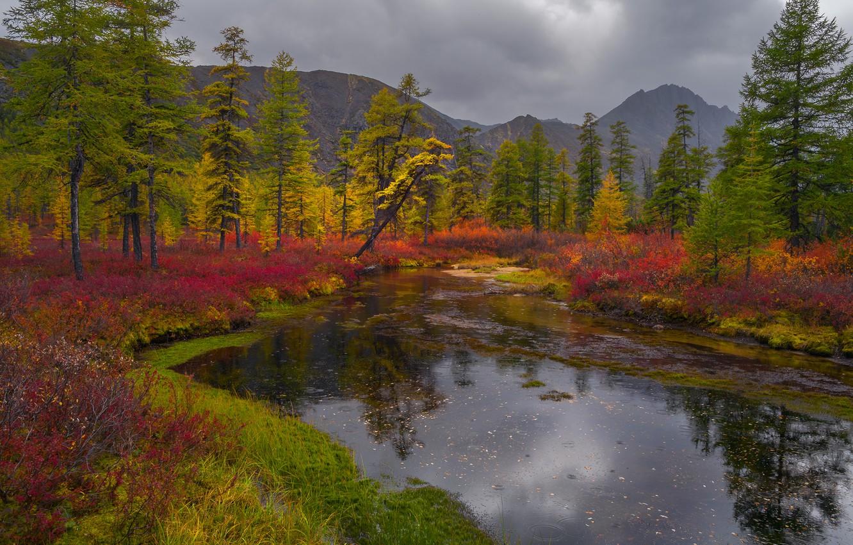 Photo wallpaper autumn, grass, trees, landscape, mountains, clouds, nature, Bank, shrubs, Vladimir Ryabkov, Kolyma, lake