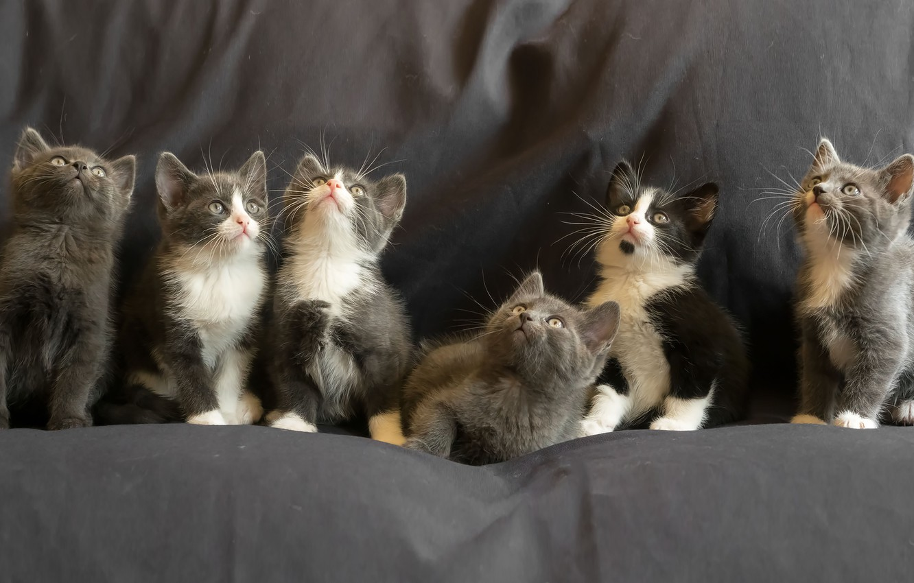Photo wallpaper kittens, kittens, Gert van den Bosch