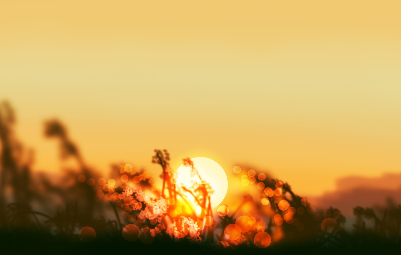 Photo wallpaper grass, the sun, sunset, nature, by Gracile