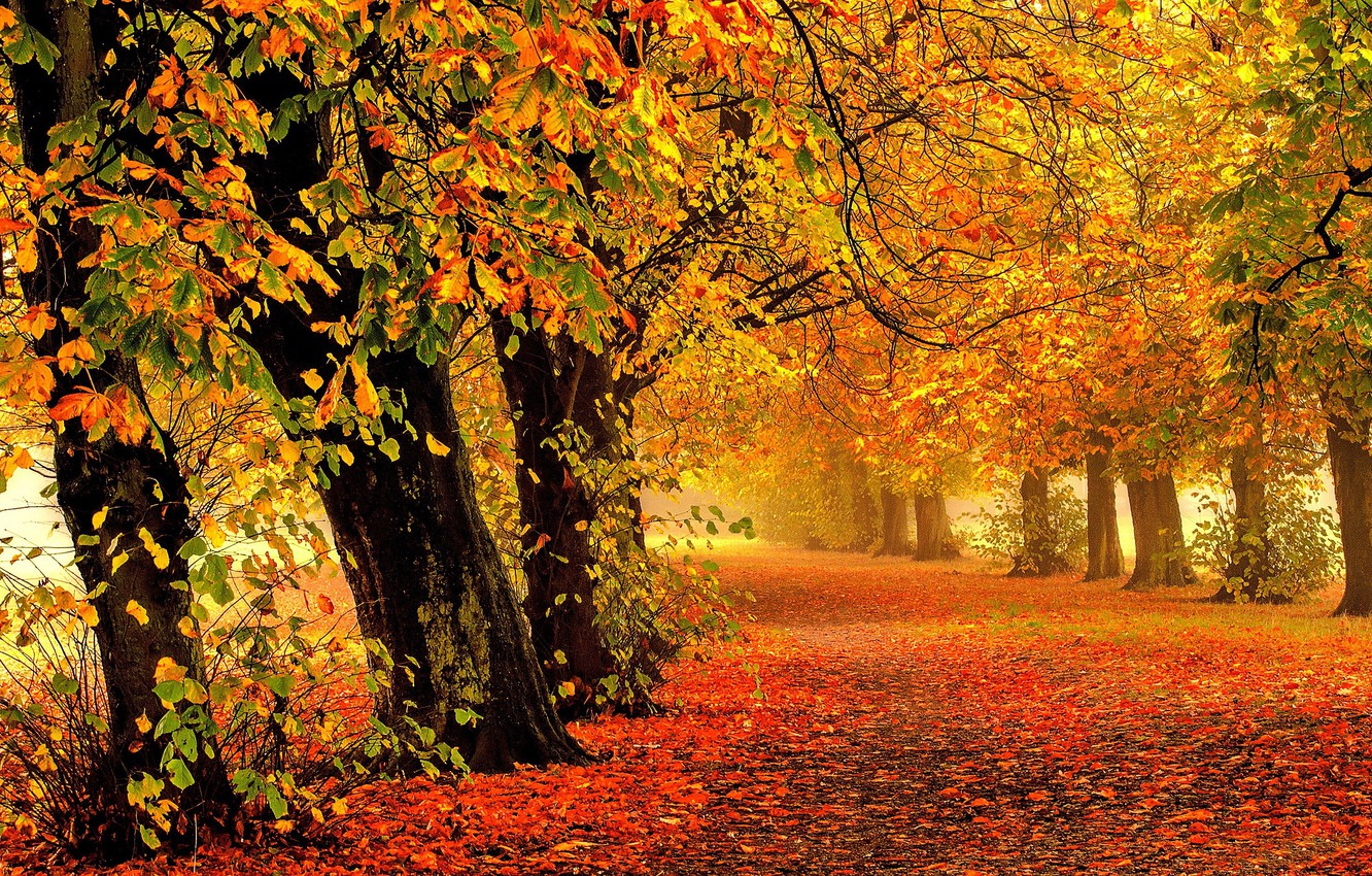 Photo wallpaper road, autumn, forest, leaves, trees, branches, nature, Park, branch, trunks, foliage, yellow, track, red, haze, …