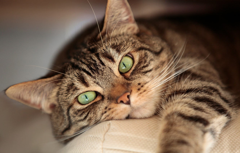 Photo wallpaper eyes, cat, mustache, stay