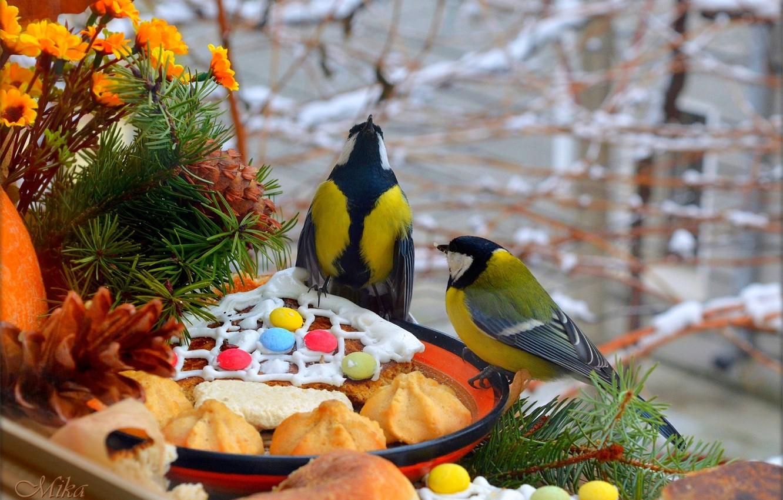 Photo wallpaper Birds, Birds, Titmouses