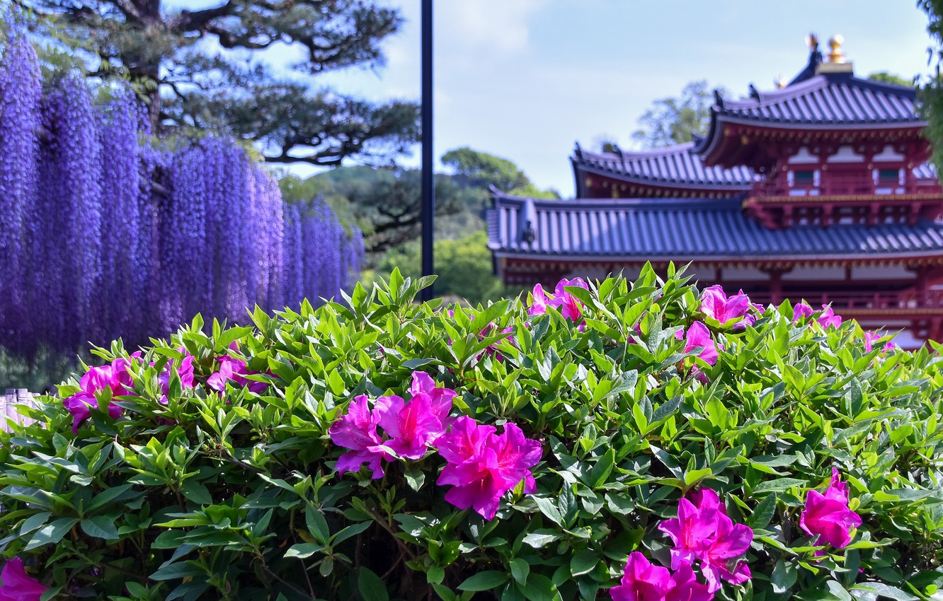 Photo wallpaper flowers, house, building, Asia, pagoda, Azalea, Wisteria, rhododendrons