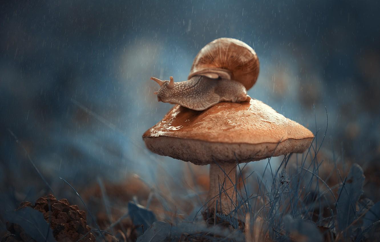 Photo wallpaper macro, mushroom, snail