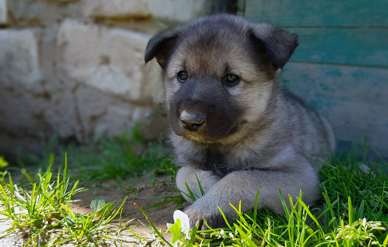 Photo wallpaper summer, grass, puppy, Mimino