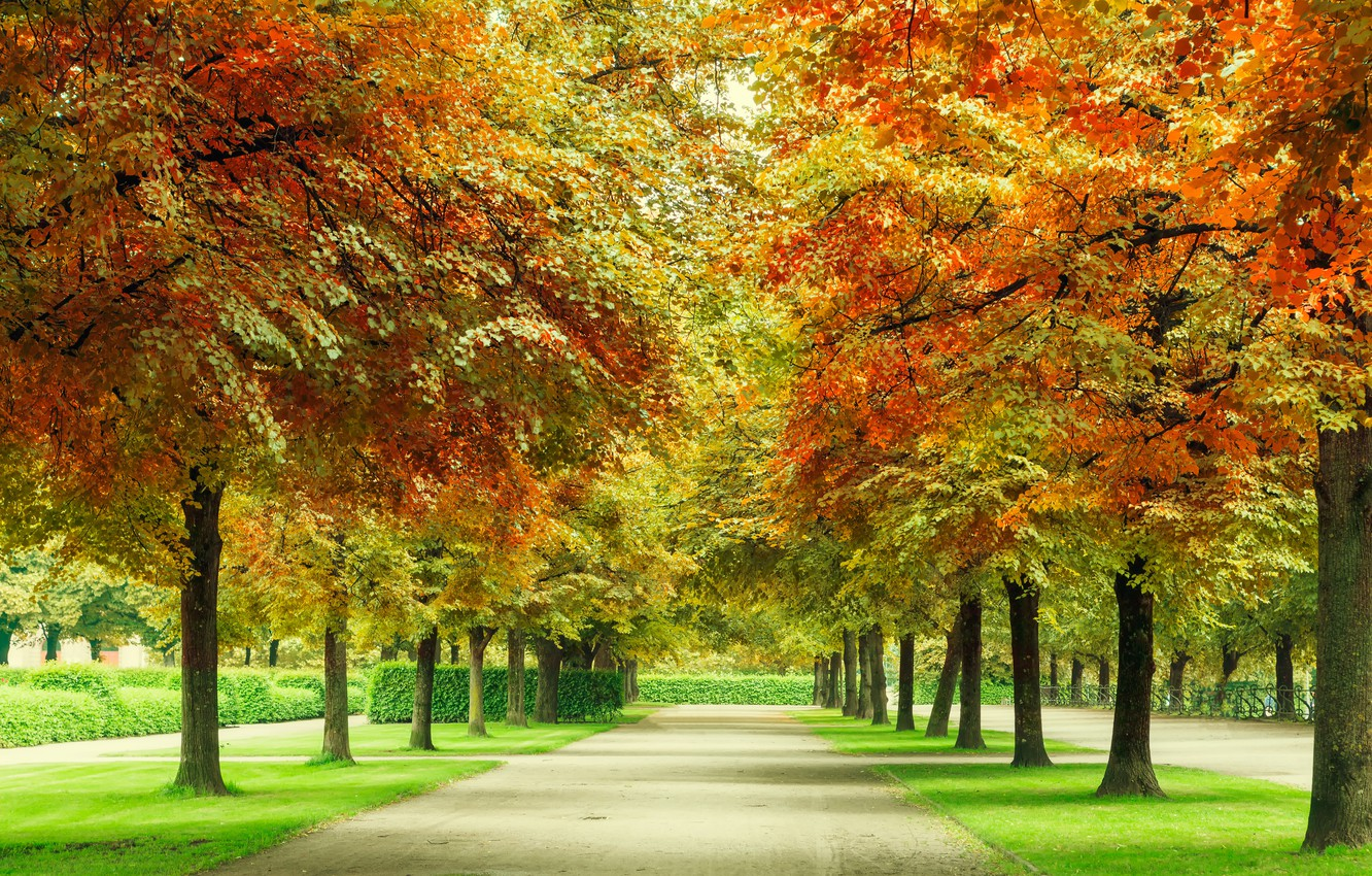 Photo wallpaper autumn, forest, leaves, trees, Park, forest, alley, landscape, park, autumn, leaves, tree, fall