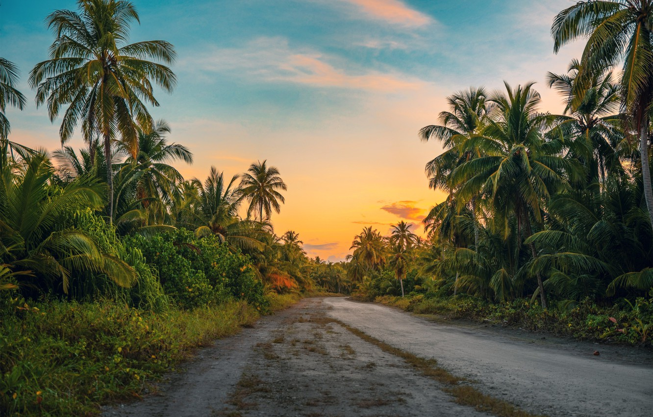 Photo wallpaper forest, road, palm, foliage