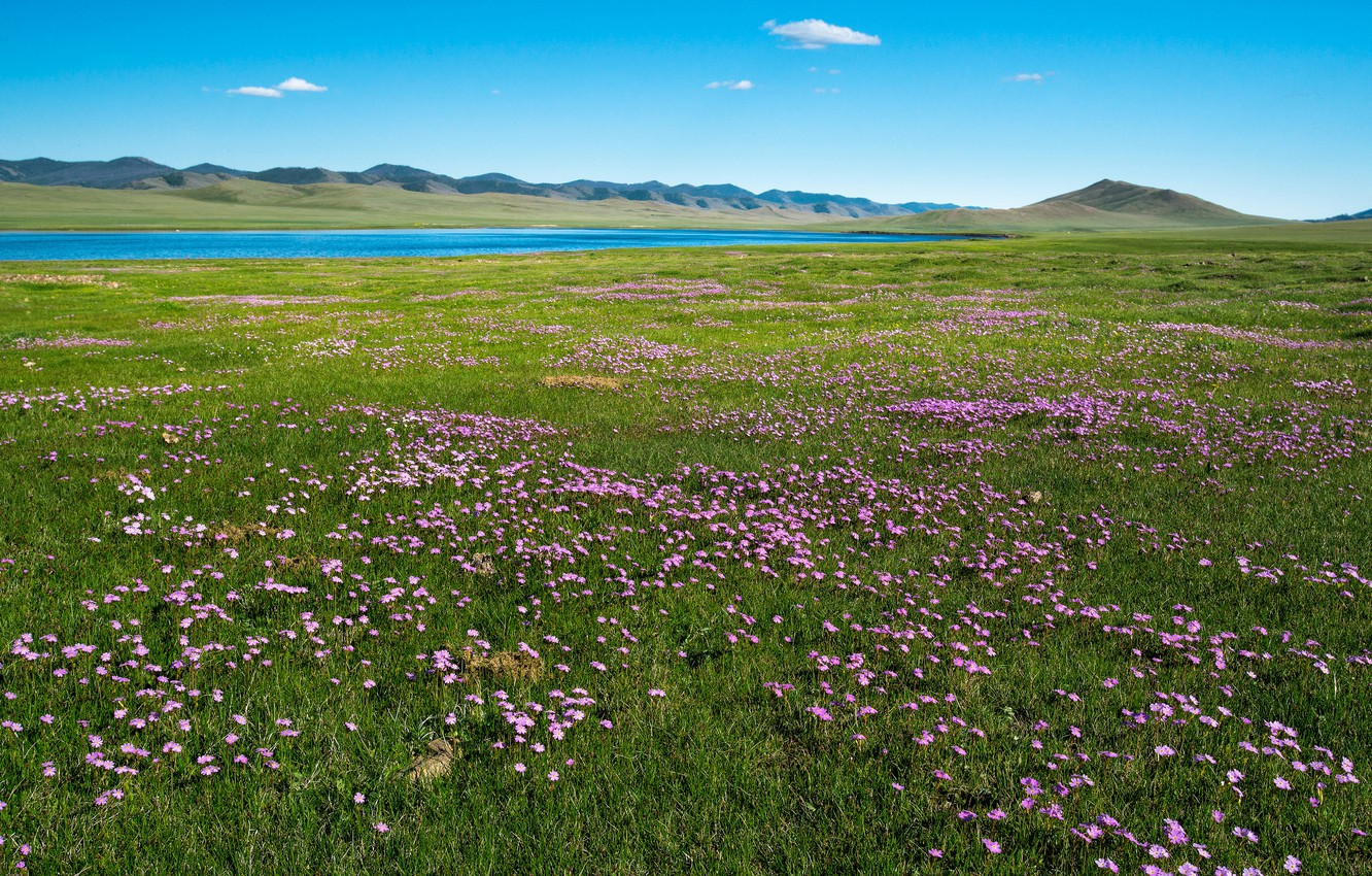Photo wallpaper field, summer, grass, flowers, mountains, river, blue, hills, shore, glade, spring, meadow, space, pink, pond, …