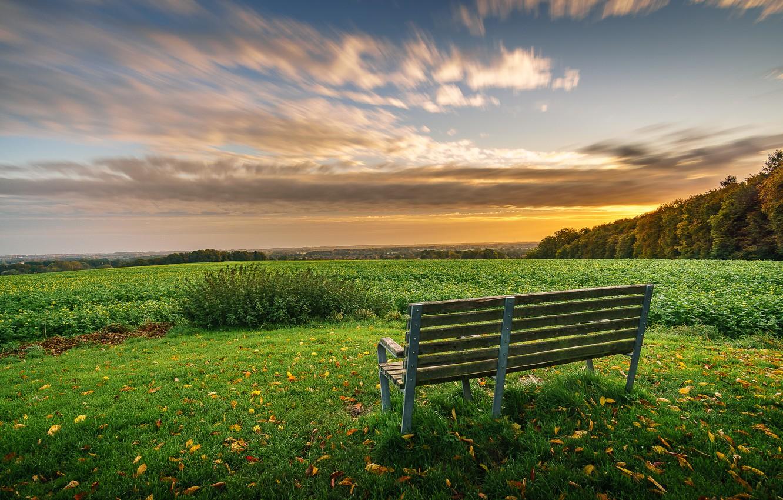 Photo wallpaper field, nature, bench