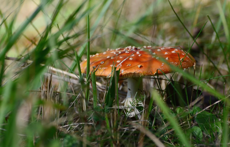 Photo wallpaper autumn, grass, mushrooms, mushroom