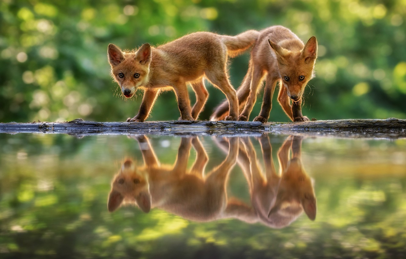 Photo wallpaper water, reflection, bokeh, cubs