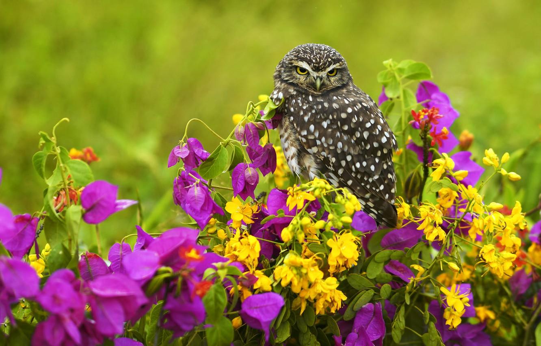 Photo wallpaper summer, flowers, owl, bird, yellow, pink, lilac, owl, bougainvillea