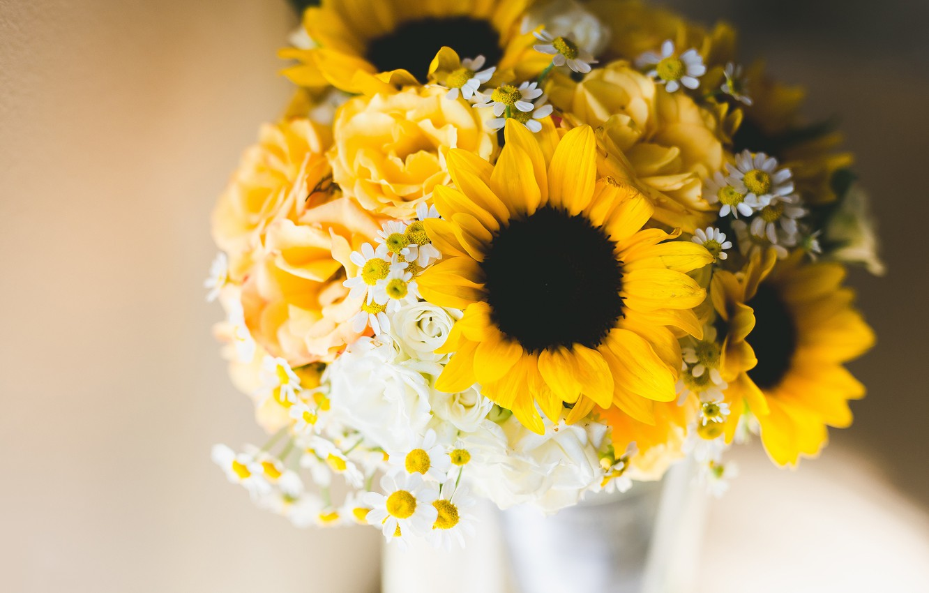 Wallpaper Sunflowers Flowers Background Roses Chamomile