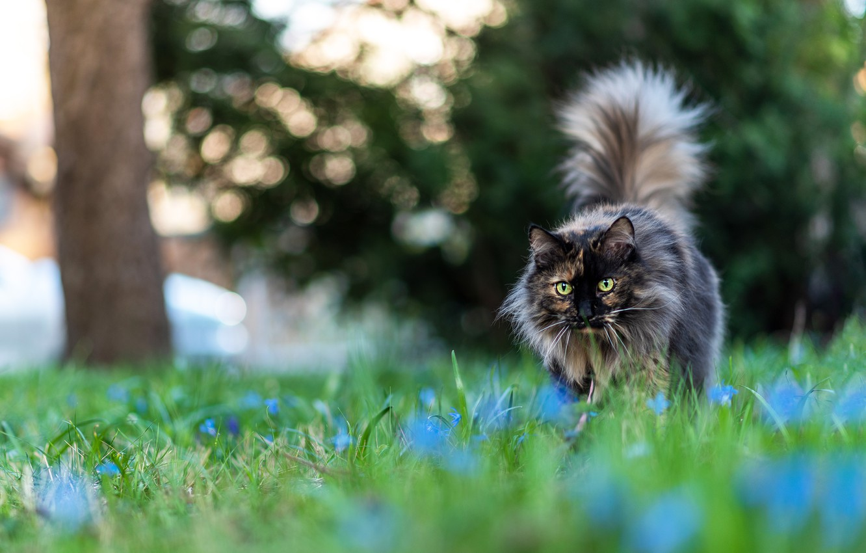 Photo wallpaper cat, summer, cat, look, flowers, pose, background, glade, garden, walk, bokeh, motley