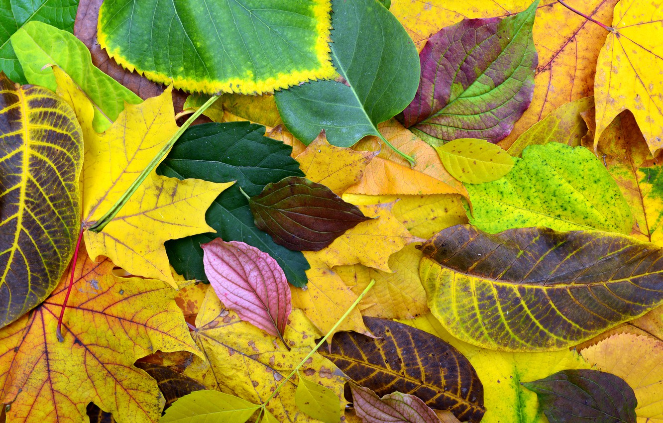 Photo wallpaper autumn, leaves, background, colorful, wood, background, autumn, leaves, autumn