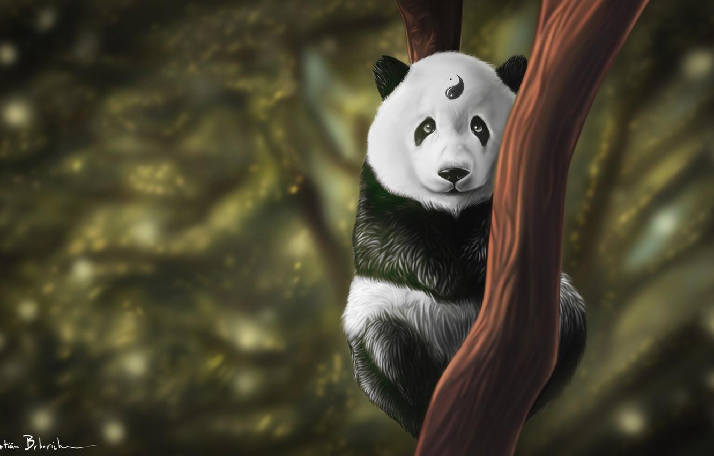 Photo wallpaper Tree, Look, Panda, Art, Yin and Yang, Kung Fu, Animal, Balance, Yin and Yang, At, …