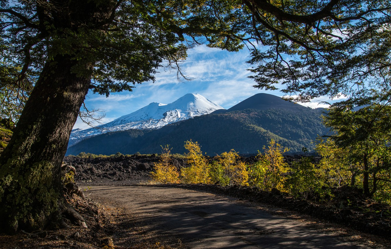 Photo wallpaper road, trees, mountains, Chile, Andes