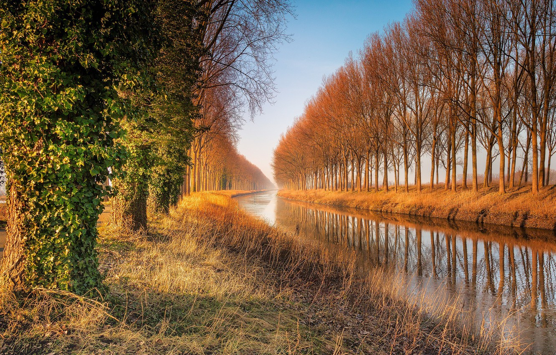 Photo wallpaper trees, nature, lake