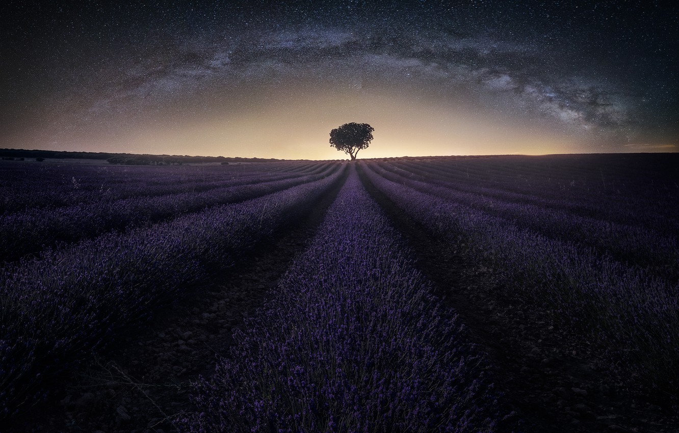 Photo wallpaper field, the sky, stars, night, the milky way, lavender