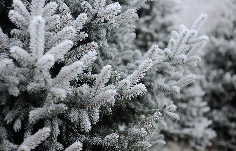 Photo wallpaper winter, snow, tree, winter, snow, spruce, frost, fir tree, fir-tree branches