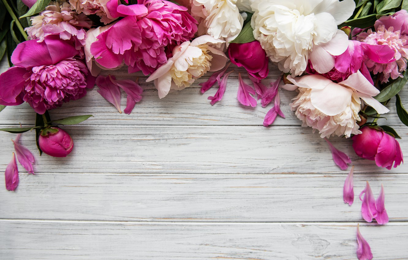 Photo wallpaper flowers, pink, wood, pink, flowers, peonies, petals, peonies